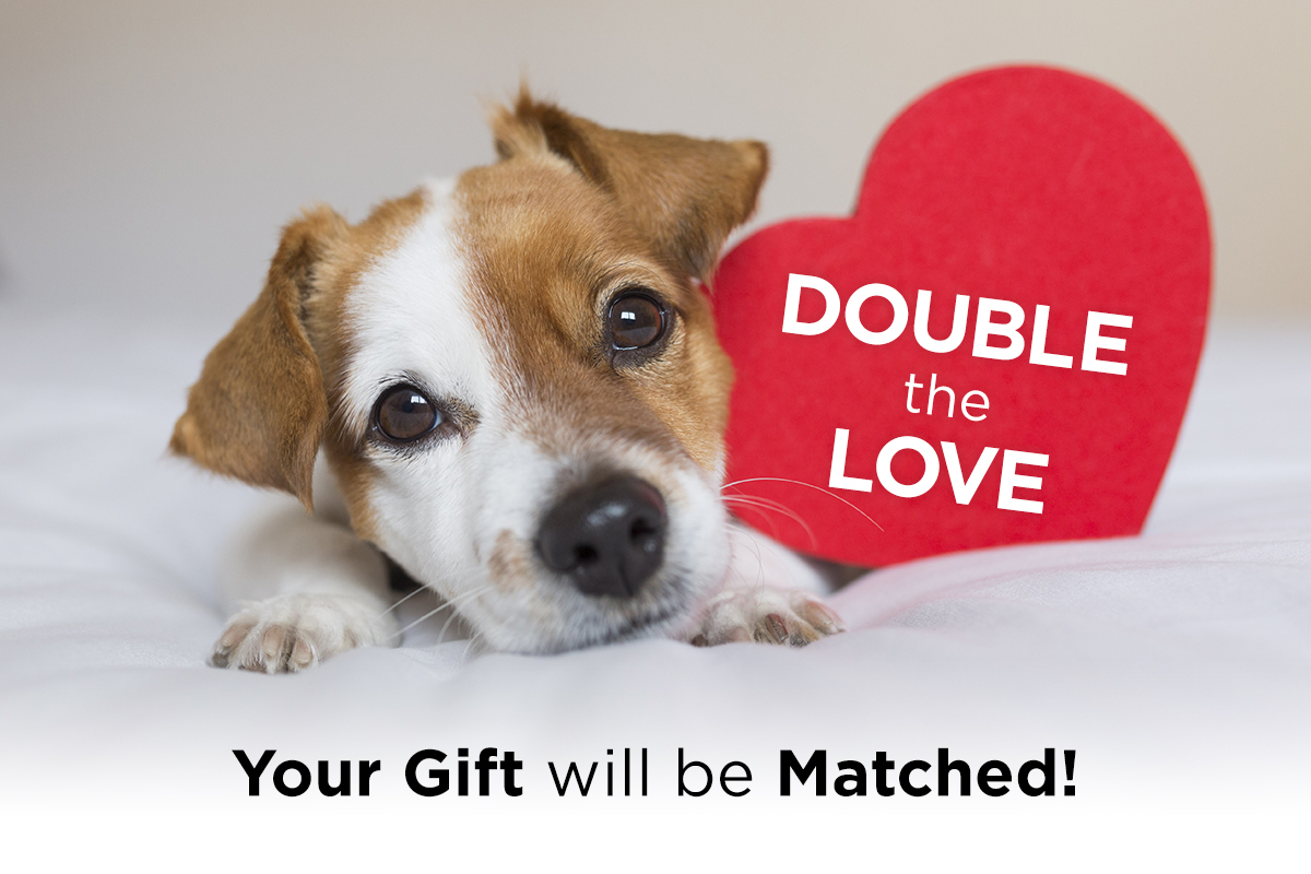 Double the Love - Your Gift will be Matched!